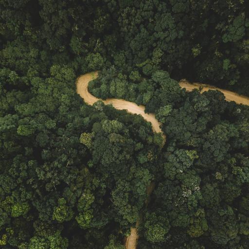 森林 树林 绿色 山路 护眼 大自然