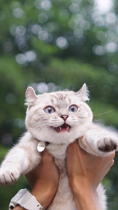 宠物猫 猫咪 惊恐 米奇耳