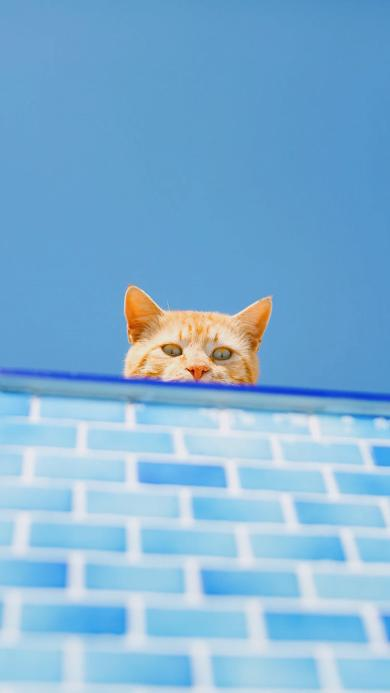 偷窥 猫咪 喵星人 可爱 蓝色 萌 宠物