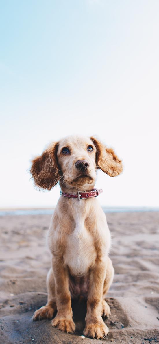 狗 寵物 動物 荒漠