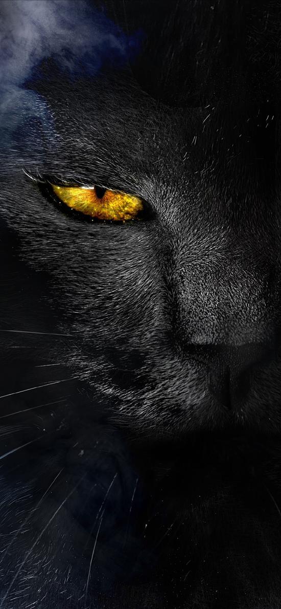 妖猫传 黑猫 海报 电影