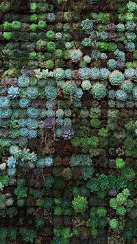 多肉 植物 密集 色彩 绿化