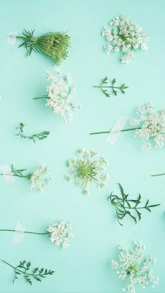 鲜花 蓝色 小清新 枝叶 平铺