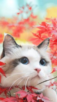猫咪 喵星人 可爱 萌 宠物 枫叶
