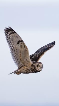 猫头鹰 翅膀 飞行 鸟