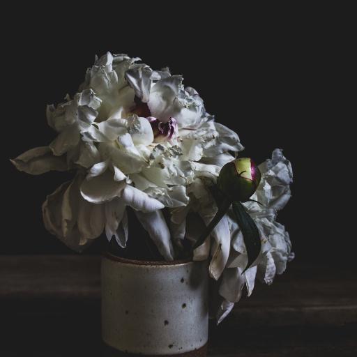 花瓶 鲜花 盛开 花瓣