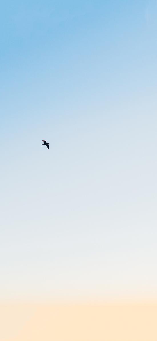 飞鸟 天空 翅膀 飞行 翱翔