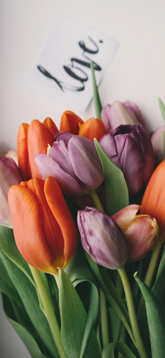 郁金香 荷兰国花 橙色 紫色