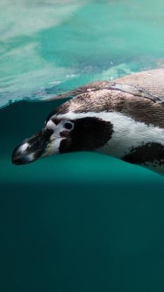 南极 企鹅 游泳 捕猎