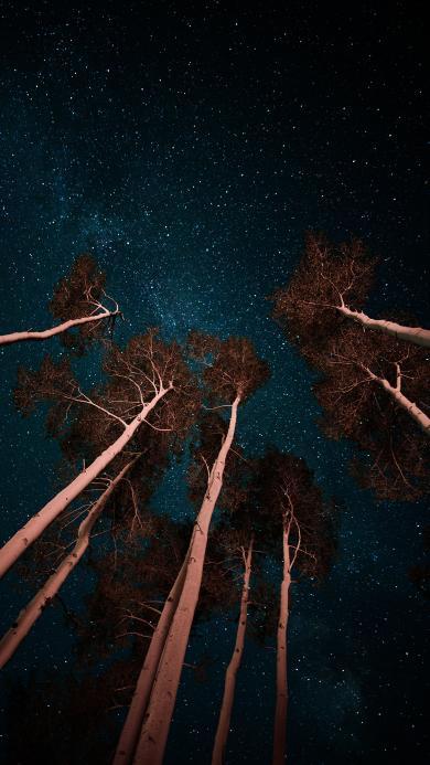 夜空 树木 星空 树干 唯美