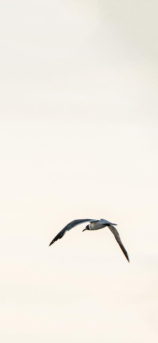 飞鸟 翅膀 高空 天空  简约