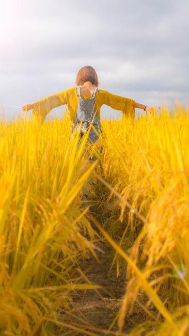 野外 稻田 背影 自然