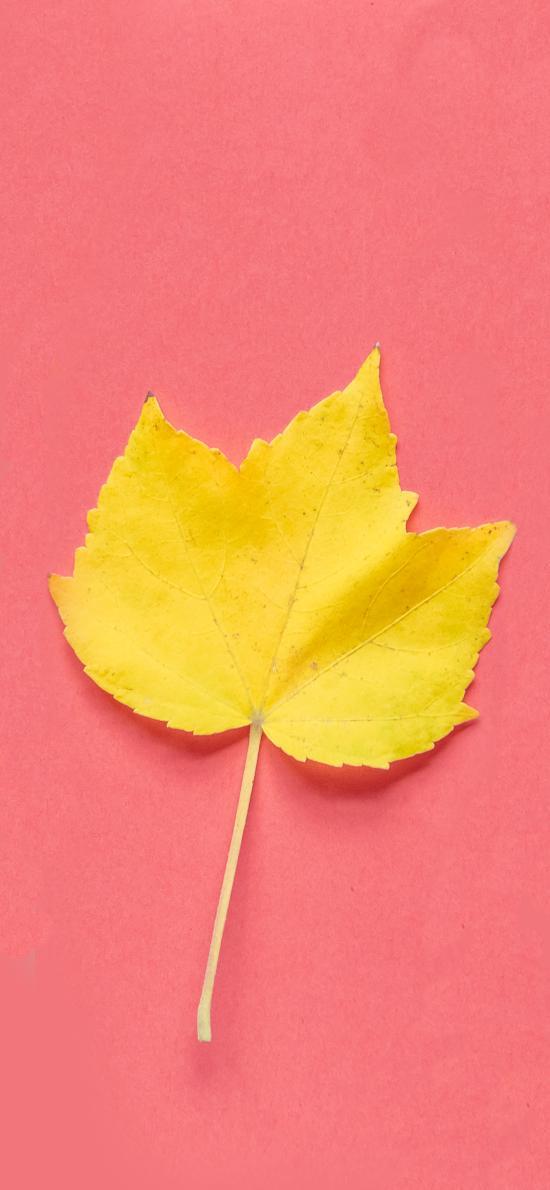 树叶 色彩 鲜艳 植物 创意 松针