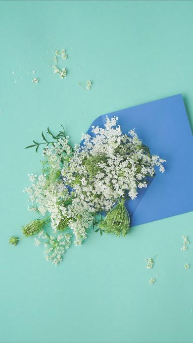 鲜花 散落 信封 唯美