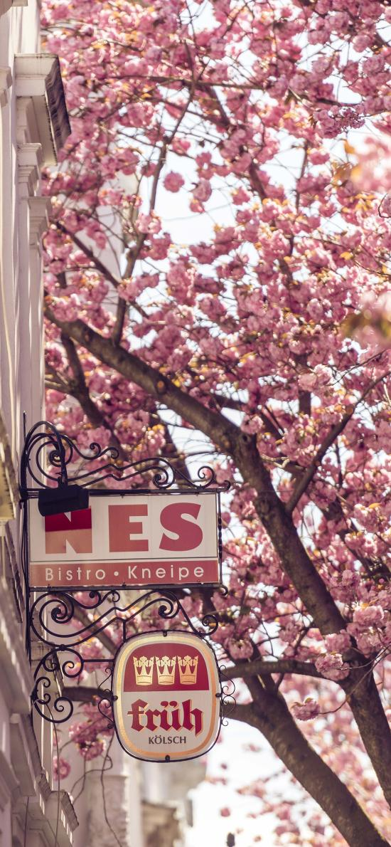 樱花 城市 街道 粉色 招牌 美