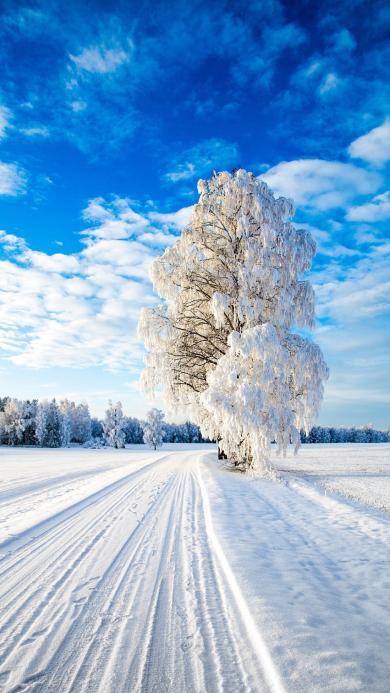 白雪覆盖 树木 冬季 蓝天