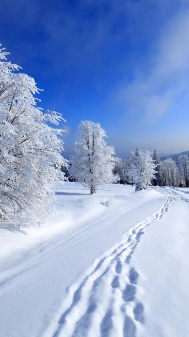 雪地 树干 白雪皑皑 脚印
