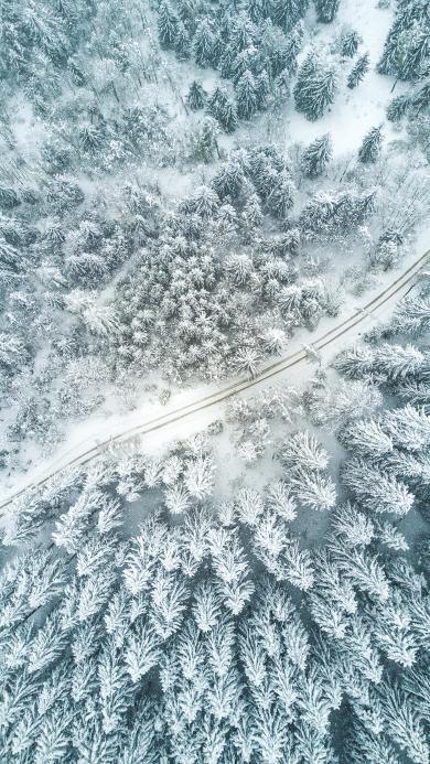 冬季 冬天 雪 树木  白色 路