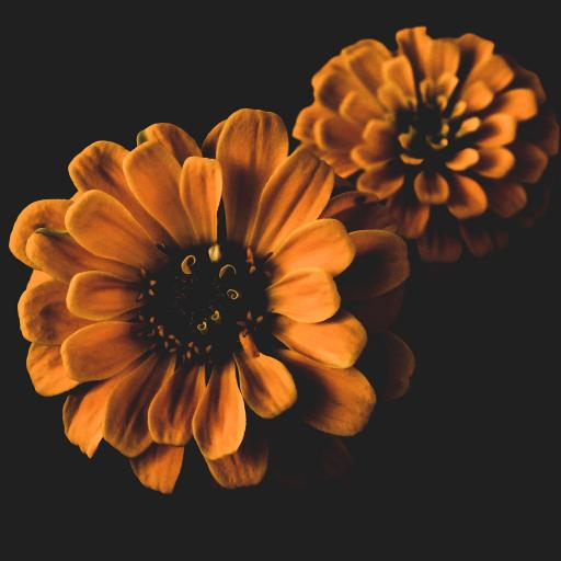 鲜花 花瓣 盛开 花蕊