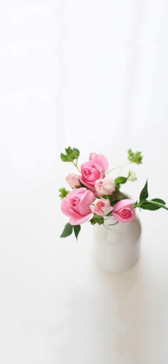 玫瑰 粉色 鲜花 浪漫 唯美 爱情 插花