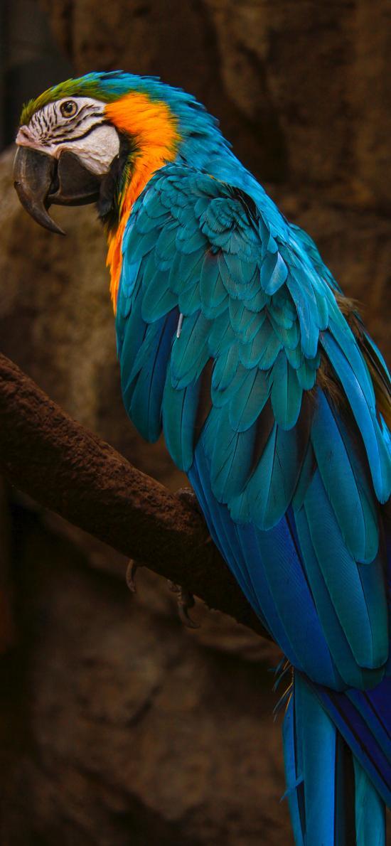 鹦鹉 鸟类 羽毛 鲜艳