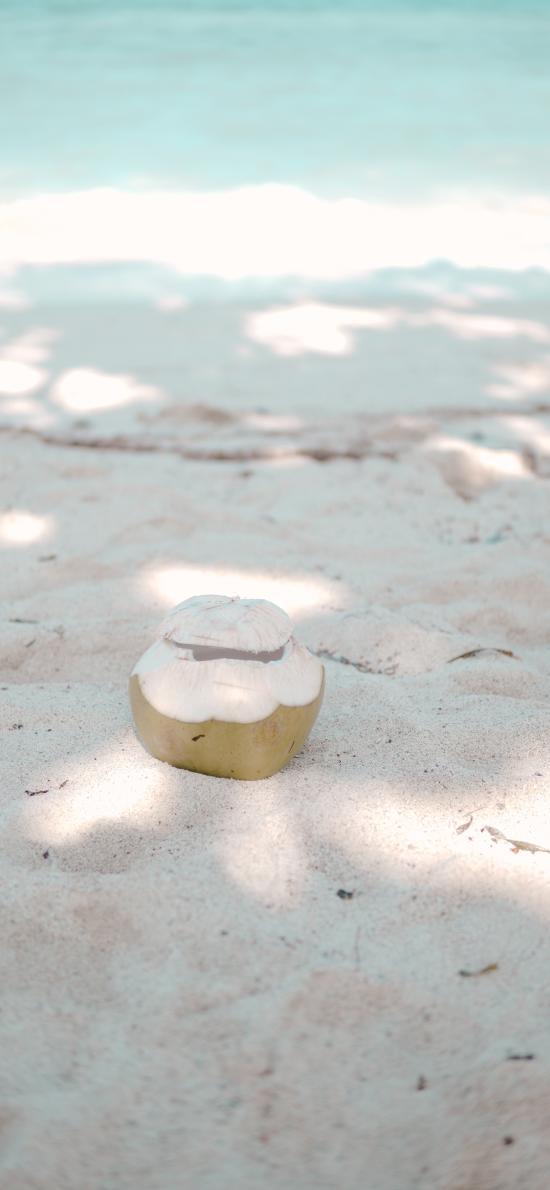 沙滩 椰子 海岸 阳光
