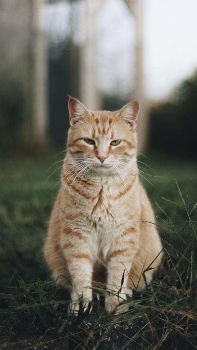 猫咪 站立 衰样 宠物