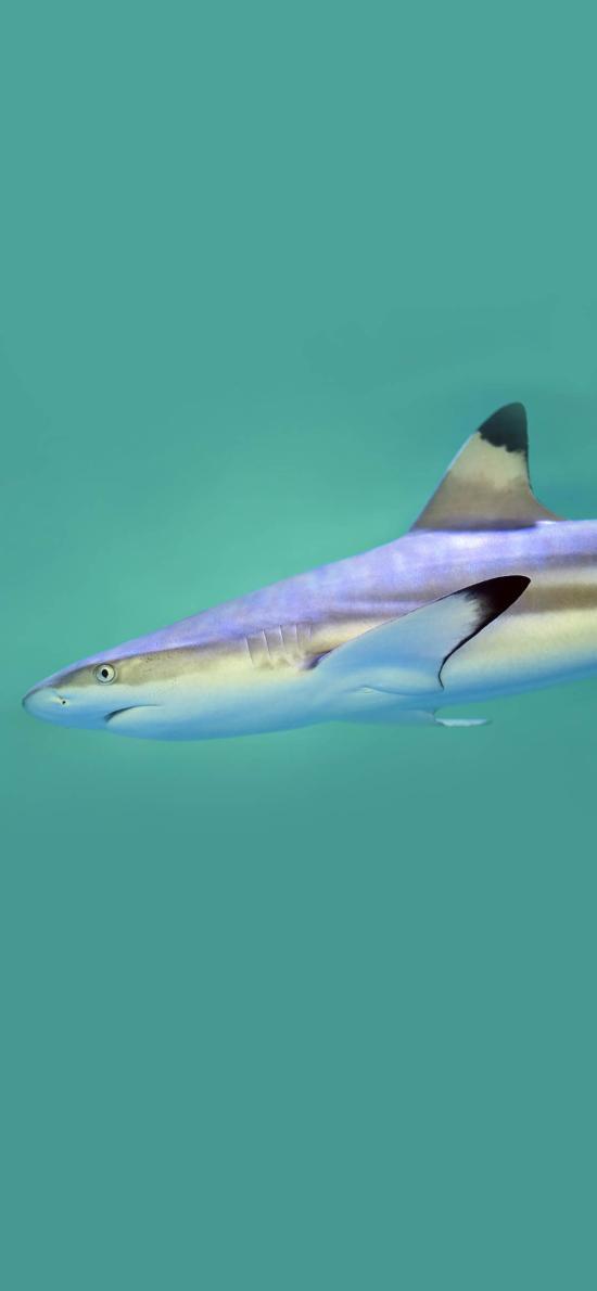 海洋生物 鲨鱼 凶猛 食肉