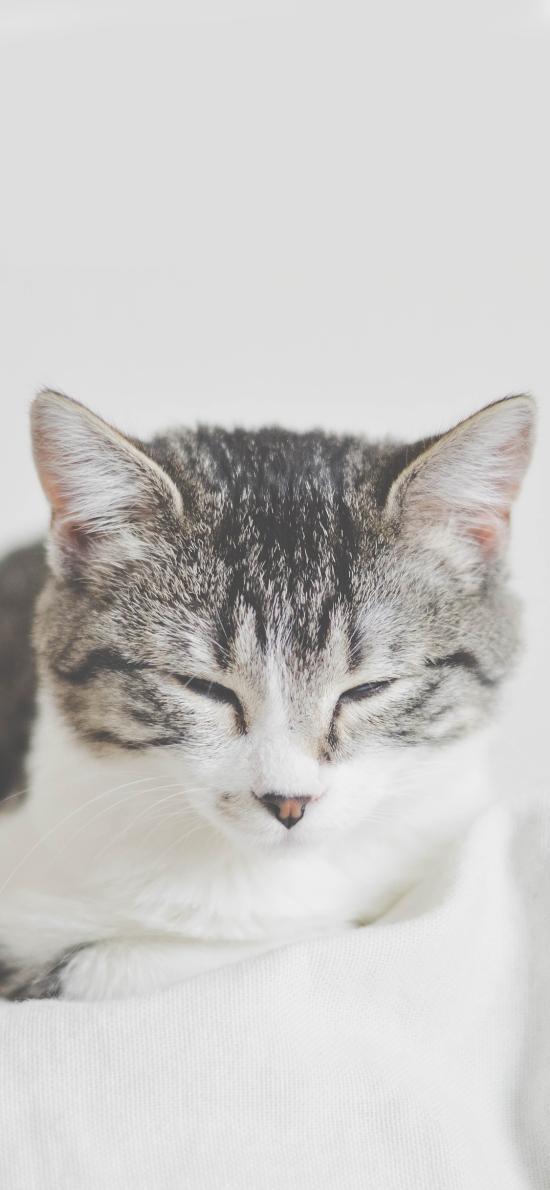 猫咪 眯眼 宠物 乖巧