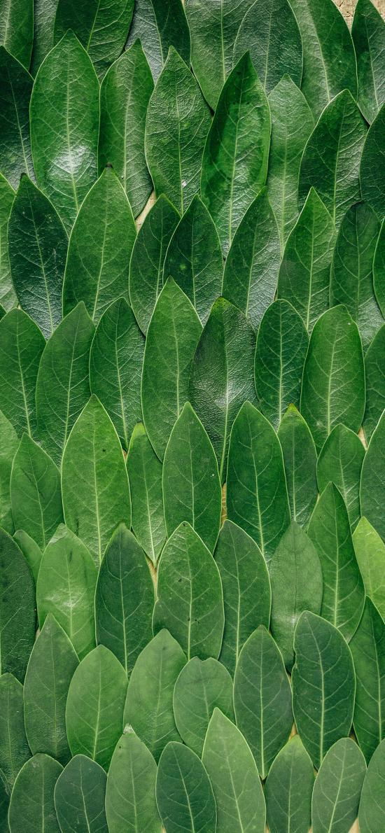 叶子 绿色 摆拍 整齐