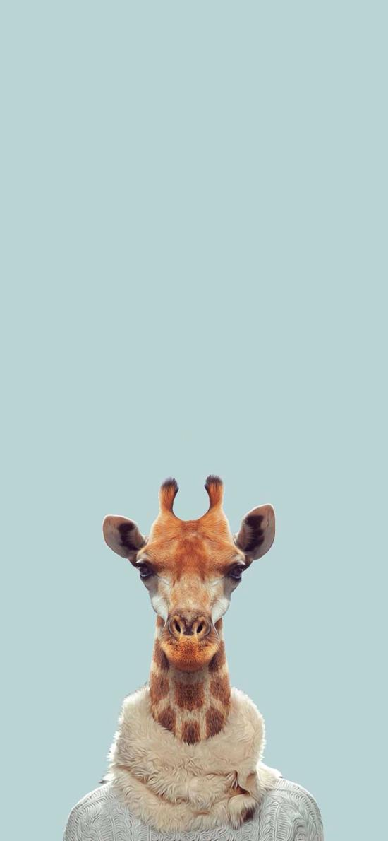 长颈鹿 围脖 毛衣