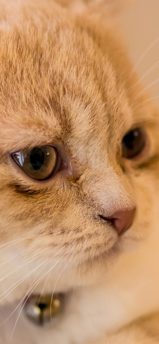 猫咪 喵星人 萌宠 铃铛