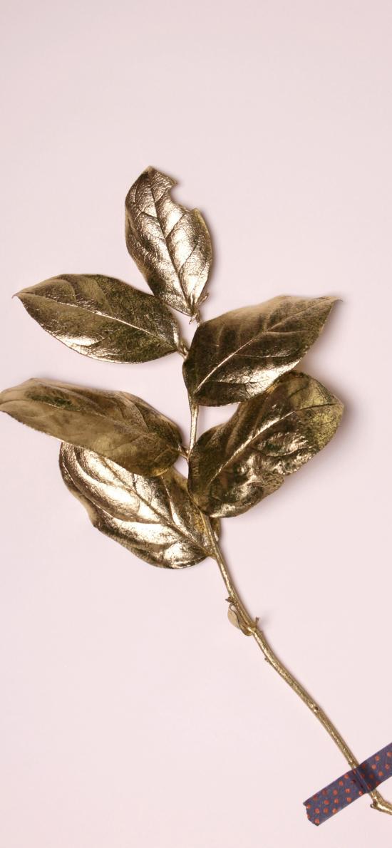 枝叶 金箔 标本 涂色