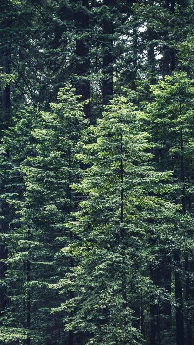 树木 绿色 大自然 护眼