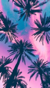 椰子树 色彩 唯美 树木 枝干