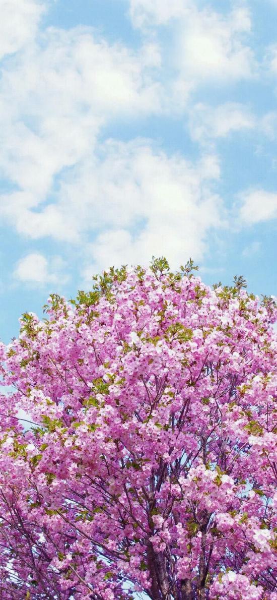 唯美 花的世界 小清新 天空