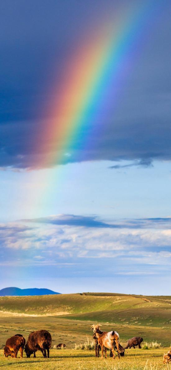 彩虹 草原 马匹 野外