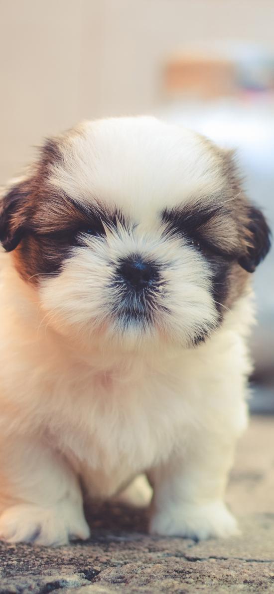 狗 宠物 动物 可爱 幼犬