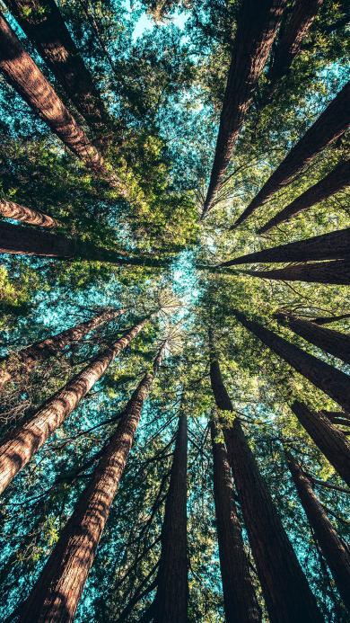 森林 参天大树 树木