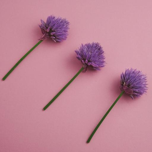 野花 花簇 紫色  盛开