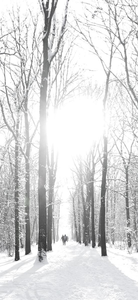 冬季 冬天 雪地 树木 白