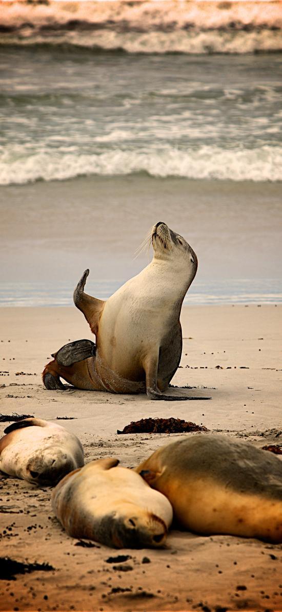 海狮 海洋生物 沙滩 大海