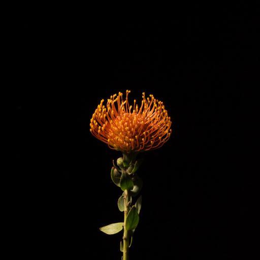 花蕊 花苞 鲜花 枝叶