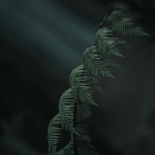 蕨类植物 松叶蕨亚门 绿植