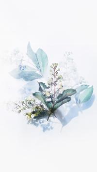 手绘 鲜花 绿叶 花蕾