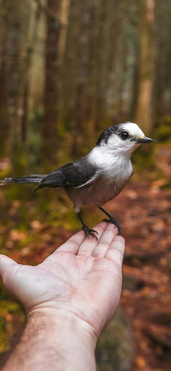 小鸟 站立 手部 野外