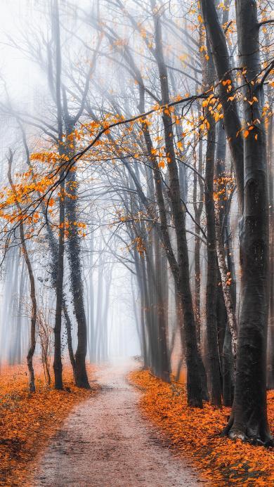 树林 小路 枫叶 落叶