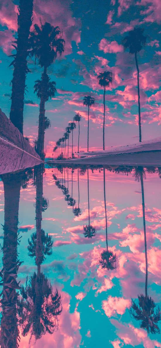 椰子树 倒影 云彩 对称