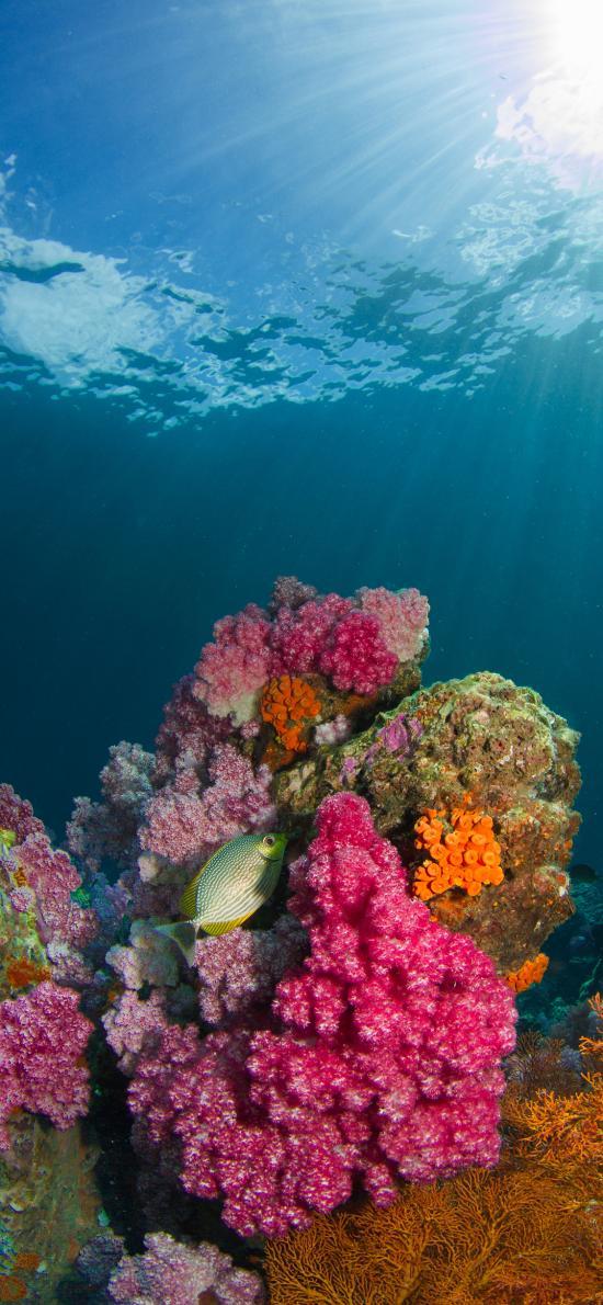 珊瑚虫 手绘 鱼类 海洋