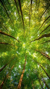 树木 绿色 春天 枝干